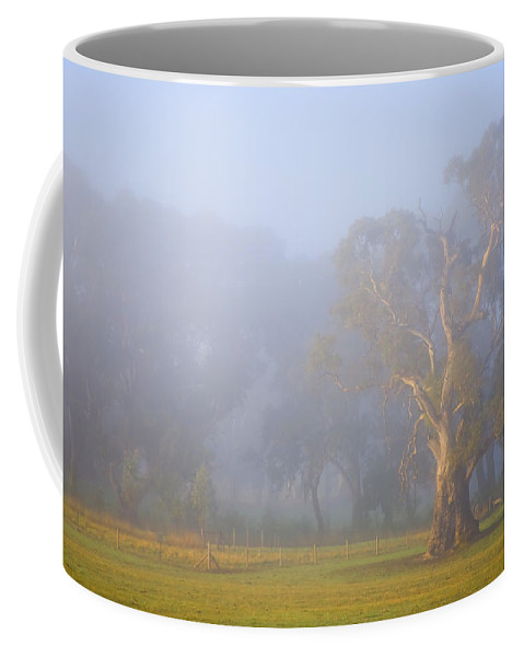 Tree Coffee Mug featuring the photograph White Gum Morning by Mike Dawson