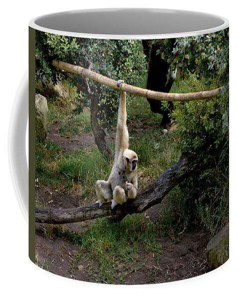Santa Coffee Mug featuring the photograph White Handed Gibbon 1 by Michael Gordon