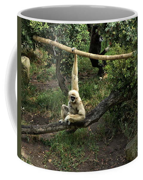 Santa Coffee Mug featuring the photograph White Handed Gibbon 2 by Michael Gordon