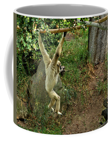 Santa Coffee Mug featuring the photograph White Handed Gibbon 3 by Michael Gordon