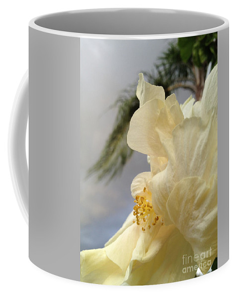 Hibiscus Coffee Mug featuring the photograph White Hibiscus by Clay Cofer