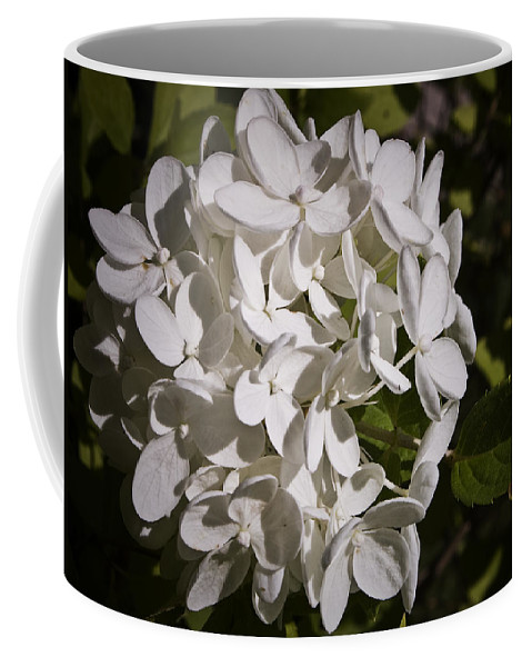 Hydrangea Coffee Mug featuring the photograph White Hydrangea Bloom by Teresa Mucha