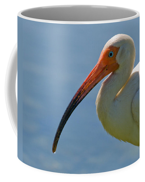 Ibis; White; Bird; Florida; Frog; Pollywogs; Pond; Seabird; Shore; Coast; Water; Fowl; Waterfowl; Fe Coffee Mug featuring the photograph White Ibis by Allan Hughes