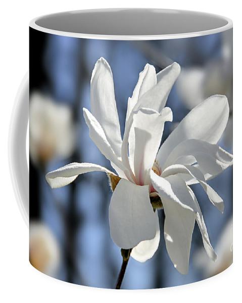 Magnolia Coffee Mug featuring the photograph White Magnolia by Elena Elisseeva
