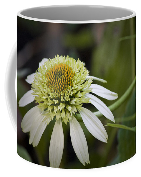 White Coffee Mug featuring the photograph White Milkshake Coneflower by Teresa Mucha