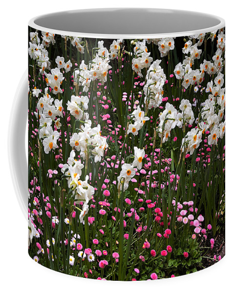 Flower Coffee Mug featuring the photograph White Narcissus With Pink English Daisies In A Spring Garden by Louise Heusinkveld