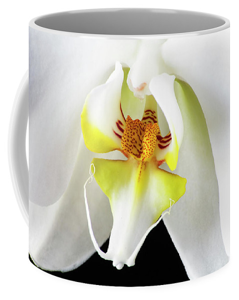 Orchids Coffee Mug featuring the photograph White Orchid by Bruce Beck