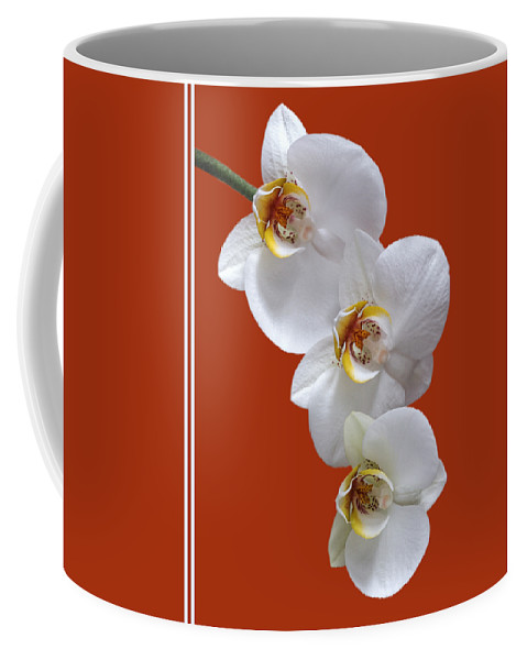 Soft White Orchid Coffee Mug featuring the photograph White Orchids On Terracotta Vdertical by Gill Billington