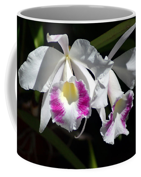 Photography Coffee Mug featuring the photograph White Orchids by Susanne Van Hulst
