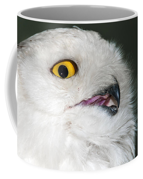 Art Coffee Mug featuring the photograph White Owl by Svetlana Sewell