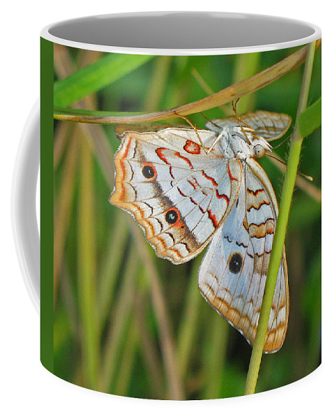 Butterfly Coffee Mug featuring the photograph White Peacock Butterfly by Kenneth Albin