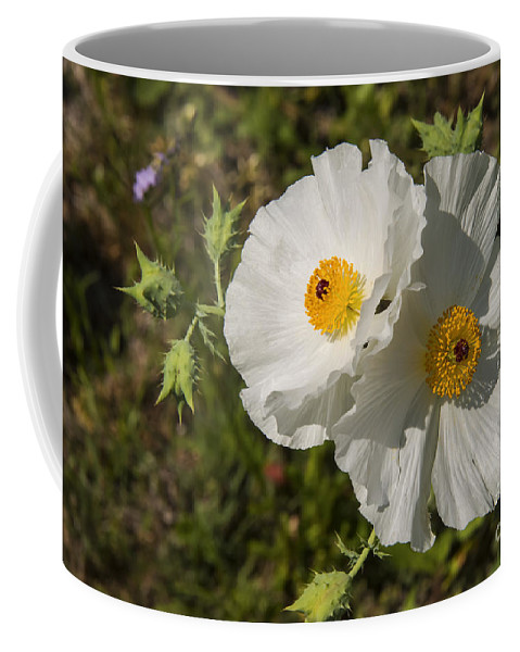 Fredericksburg Texas White Poppy Poppies Bloom Blooms Flower Flowers Spring Hill Country Coffee Mug featuring the photograph White Poppy Twins by Bob Phillips