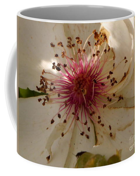 White Rose Coffee Mug featuring the photograph White Rose Centerpiece by Christiane Schulze Art And Photography