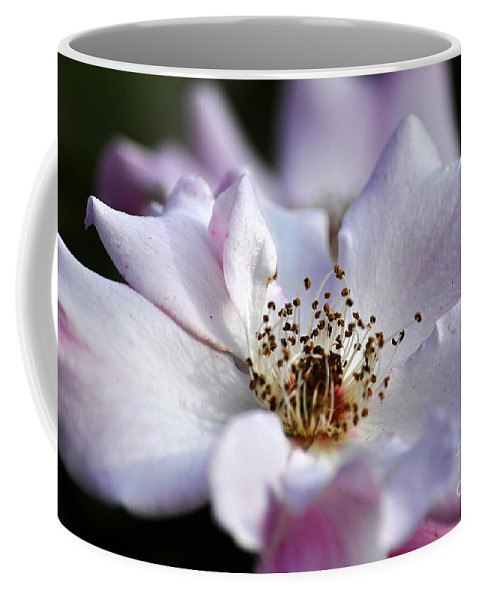 Clay Coffee Mug featuring the photograph White Rose by Clayton Bruster