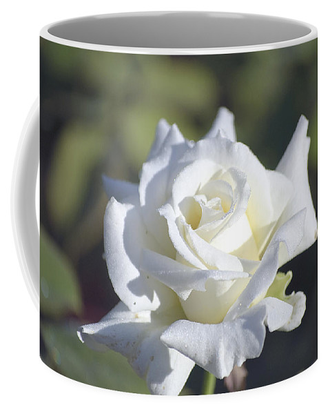 Rose Coffee Mug featuring the photograph White Rose by Kenneth Albin