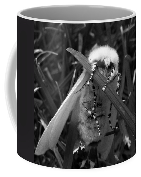 Moth Coffee Mug featuring the photograph White Satin Moth by Ruth Palmer