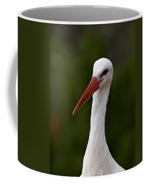 Lehtokukka Coffee Mug featuring the photograph White Stork 5 by Jouko Lehto