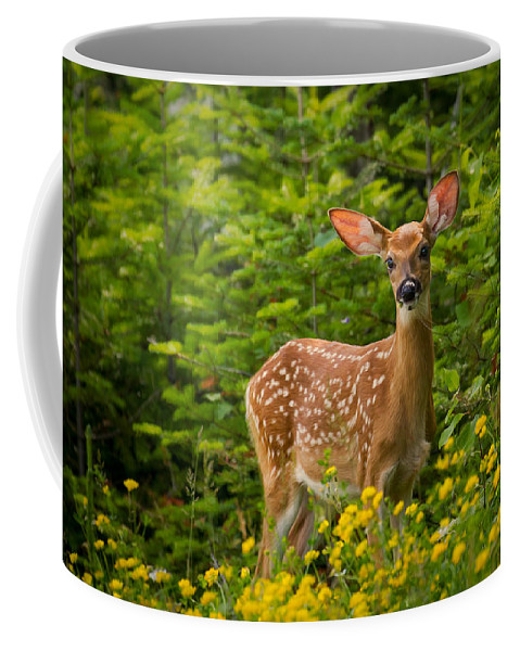 Animals Coffee Mug featuring the photograph White-tail Fawn by Rikk Flohr