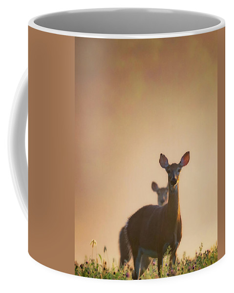Deer Coffee Mug featuring the photograph White-tailed Deer 2016 by Bill Wakeley