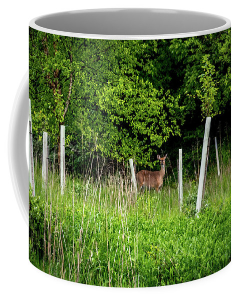 Howard Coffee Mug featuring the photograph White Tailed Deer by Howard Roberts