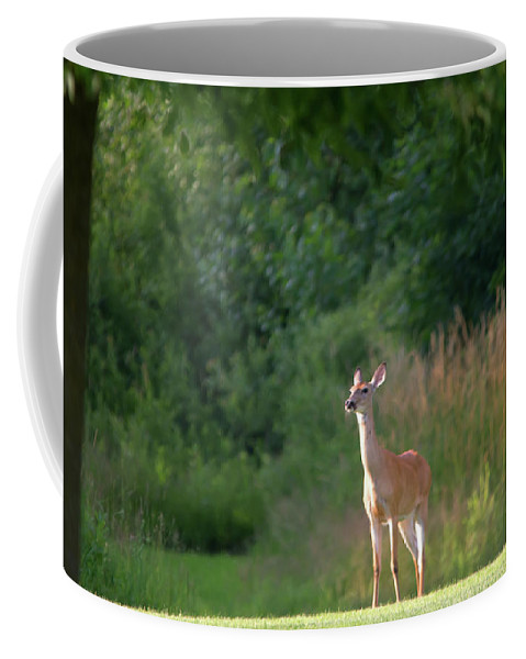 White Tailed Deer Coffee Mug featuring the photograph White Tailed by Linda Kerkau