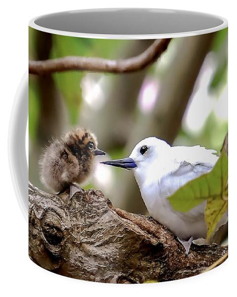 Coffee Mug featuring the photograph White Terns Koa And Parent...bird Love by Melody Bentz