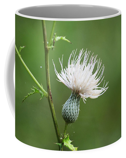 Thistle Coffee Mug featuring the photograph White Thistle Flower by Kenneth Albin