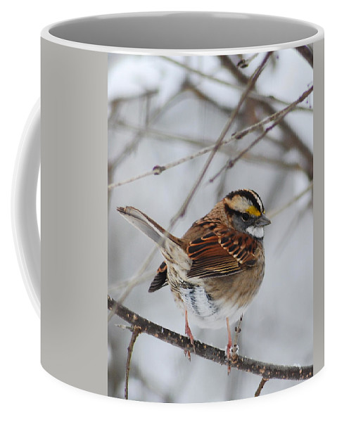 White-throated Sparrow Coffee Mug featuring the photograph White Throated Sparrow 2 by Michael Peychich