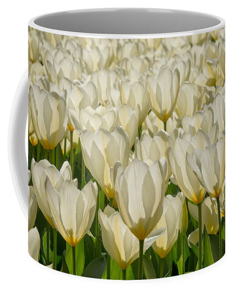 Holland Coffee Mug featuring the photograph White Tulips by Cheryl Schneider