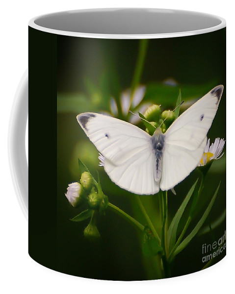 White Butterfly Coffee Mug featuring the photograph White Wings Of Wonder by Kerri Farley