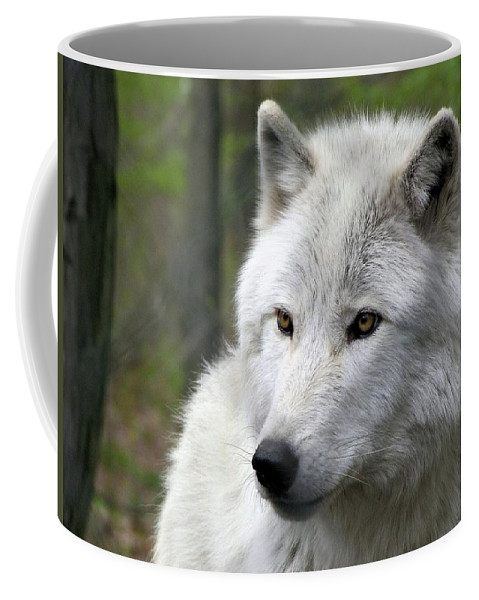 White Wolf With Golden Eyes Coffee Mug For Sale By Carol Mcgrath