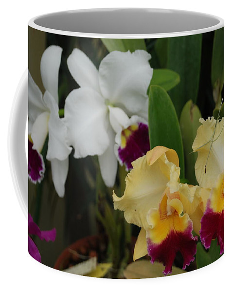 Macro Coffee Mug featuring the photograph White Yellow Orchids by Rob Hans