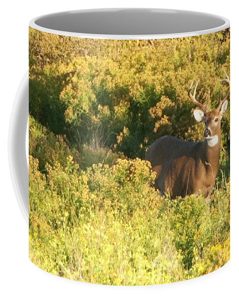 Deer Coffee Mug featuring the photograph Whitetail Buck by Steven Natanson