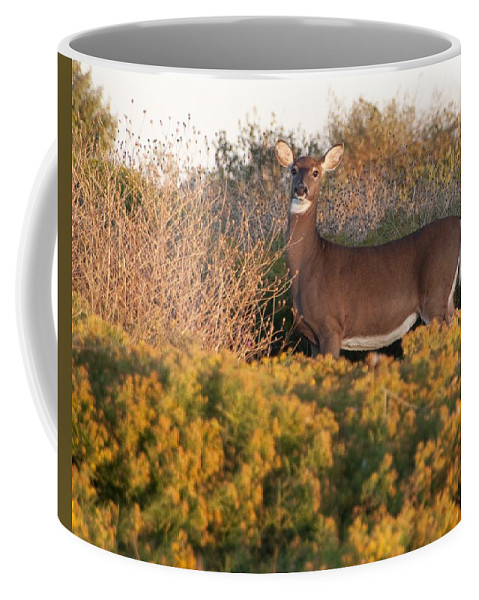 Deer Coffee Mug featuring the photograph Whitetail Doe by Steven Natanson