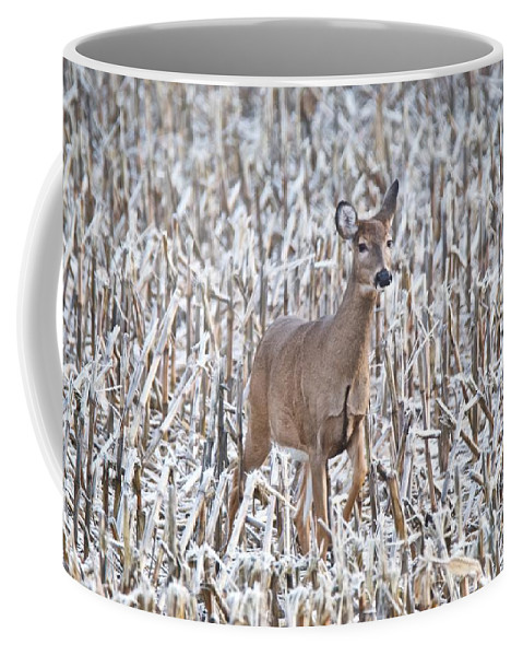 Deer Coffee Mug featuring the photograph Whitetail In Frosted Corn 537 by Michael Peychich