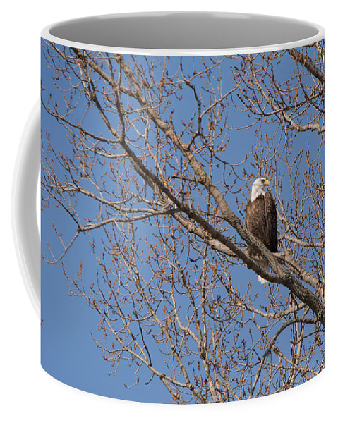 Bald Eagle Coffee Mug featuring the photograph Who Goes There by Linda Kerkau