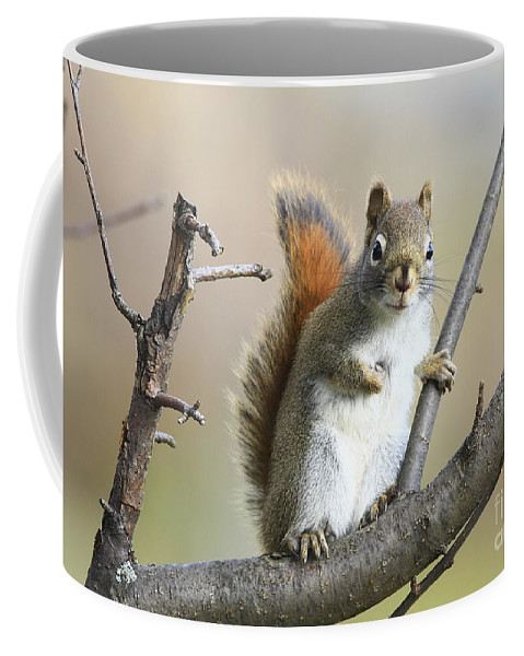 Squirrel Coffee Mug featuring the photograph Who Me by Deborah Benoit
