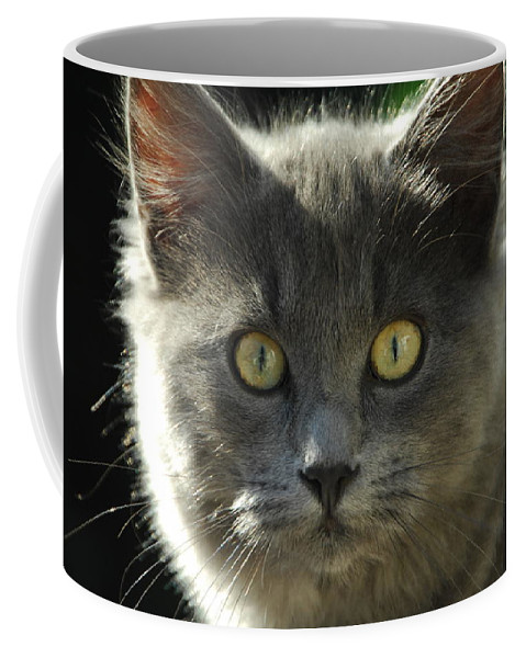 Cat Coffee Mug featuring the photograph Who Me by Donna Blackhall