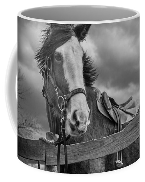 Long Valley Coffee Mug featuring the photograph Why Hello There by Kristopher Schoenleber