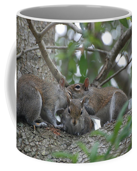 Squirrel Coffee Mug featuring the photograph Why Me by Rob Hans