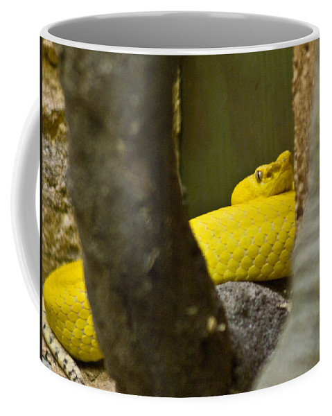 Yellow Coffee Mug featuring the photograph Wicked Snake by Douglas Barnett