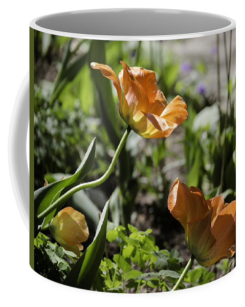 Flowers Coffee Mug featuring the photograph Wide Open Tulips by Teresa Mucha