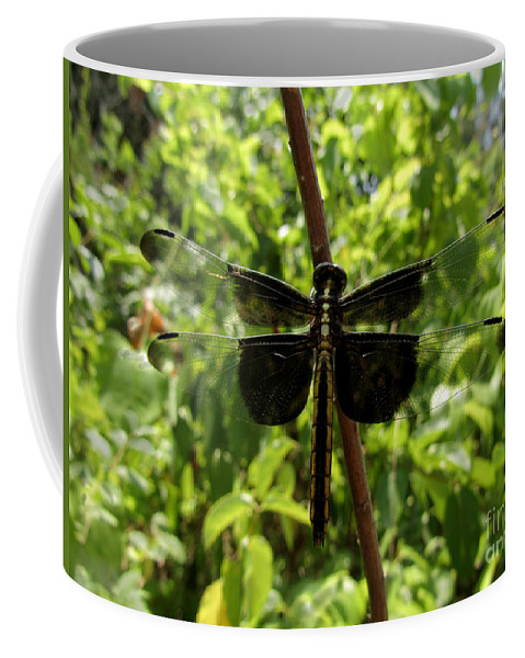 Insect Coffee Mug featuring the photograph Widow Skimmer Dragonfly Female by Donna Brown