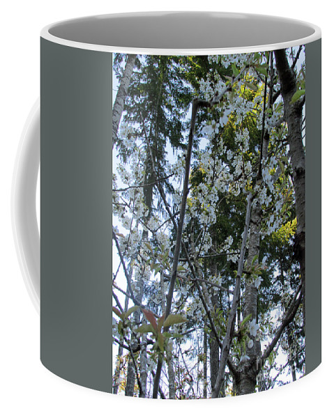 Wild Coffee Mug featuring the photograph Wild Cherry Tree Blossoms On Verona by Benjamin Hanna