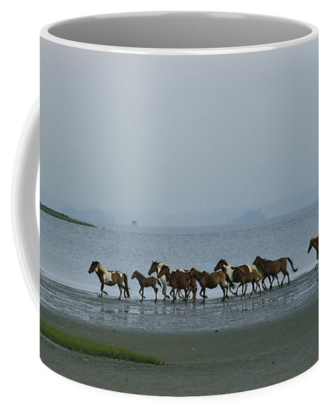 North America Coffee Mug featuring the photograph Wild Chincoteague Ponies Run by Medford Taylor
