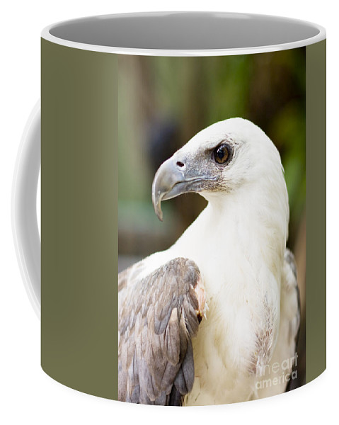 Accipitridae Coffee Mug featuring the photograph Wild Eagle by Jorgo Photography - Wall Art Gallery