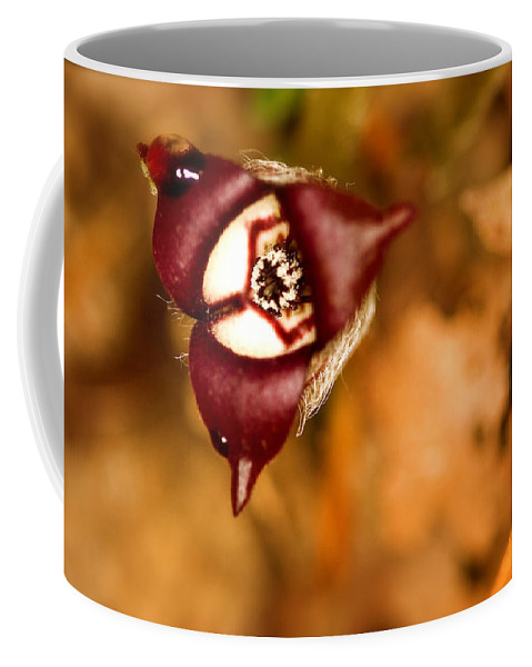 Beautiful Coffee Mug featuring the photograph Wild Ginger by Jack R Perry