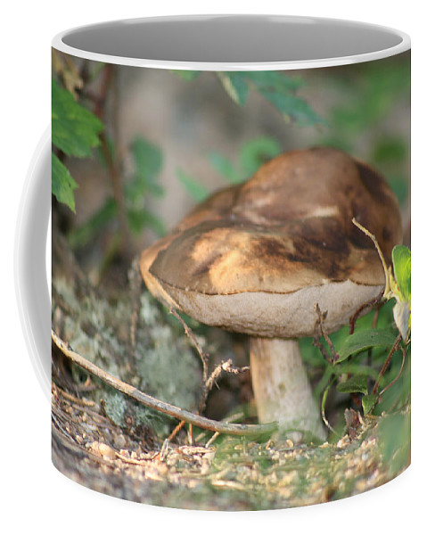 Mushroom Wild Plants Nature Forest Earth Natural Coffee Mug featuring the photograph Wild Mushroom by Andrea Lawrence