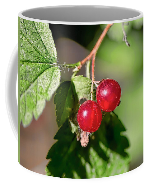 Wild Goosberry Coffee Mug featuring the photograph Wild Red Goosberries by Leif Sohlman