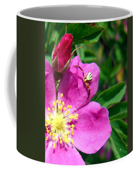 Spider Coffee Mug featuring the photograph Wild Rose And The Spider by Will Borden